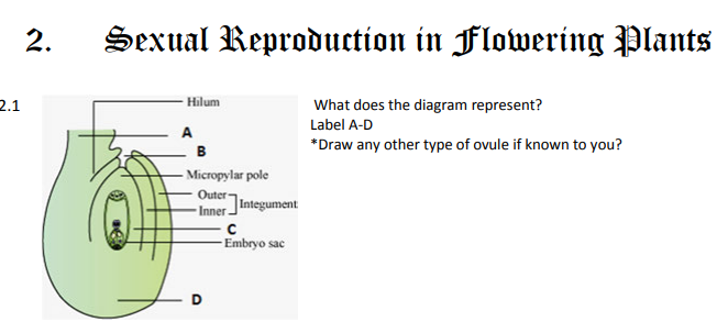 Cbse Class 12 Biology Sexual Reproduction In Flowering