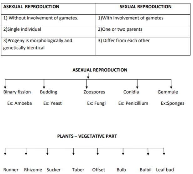 CBSE Class 12 Biology - Reproduction In Organisms notes