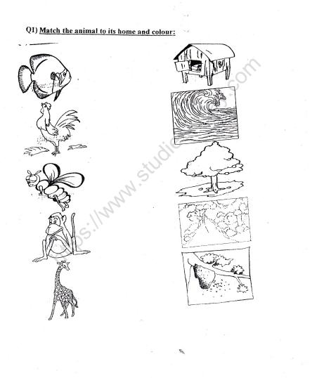 Cbse Class 2 Evs Practice Animals Worksheet Set B Practice Worksheet For Environmental Studies