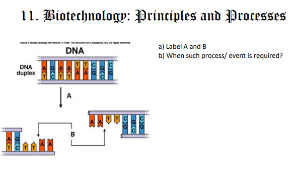 Cbse Class 12 Biology Biotechnology Principles And Processes Diagrams Based Questions