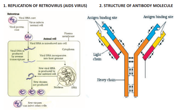 Cbse Class 12 Biology Human Health And Diseases Diagrams