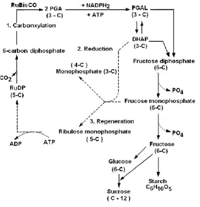 NEET Biology Photosynthesis Chapter Notes-13